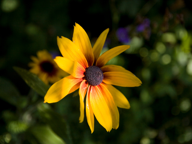 Flowers in the Wing Creek community