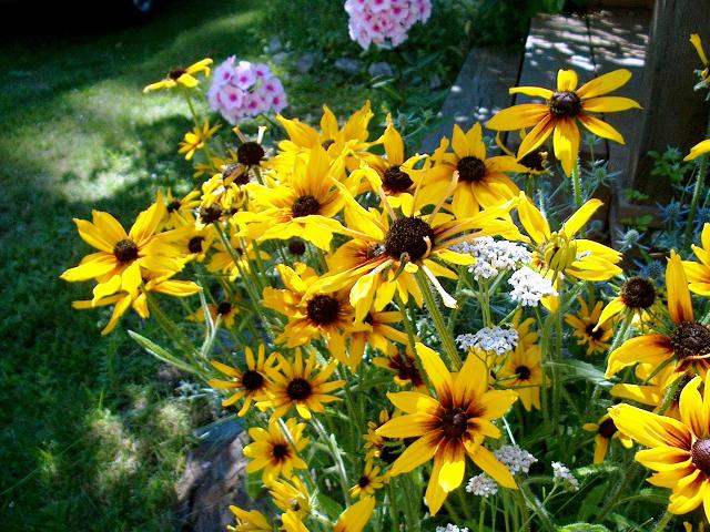 Flowers in the Wing Creek gardens