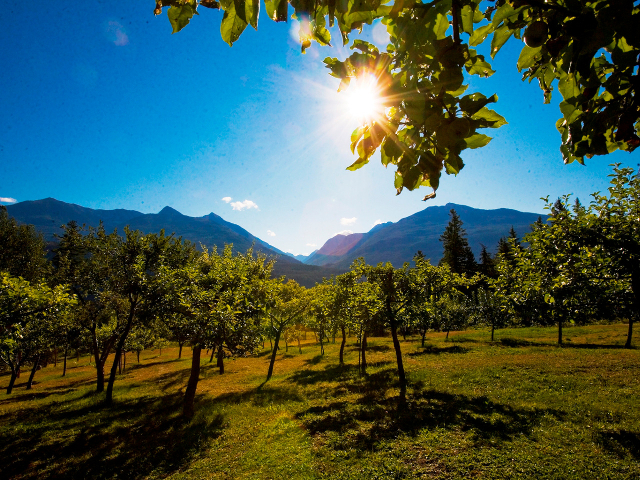 Wing Creek Orchard